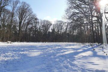 Een veld met een pak sneeuw erop en op de achtergrond een bos